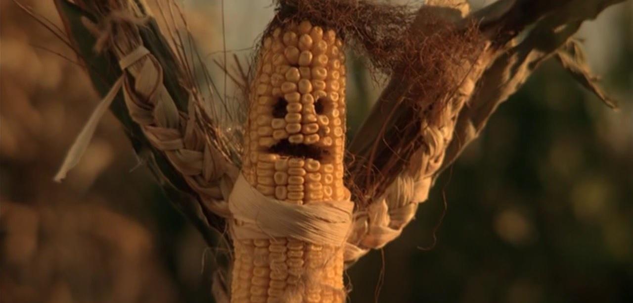 Промоутер, который может провести бой Хабиба и Фергюсона, ушел на кукурузный карантин - фото